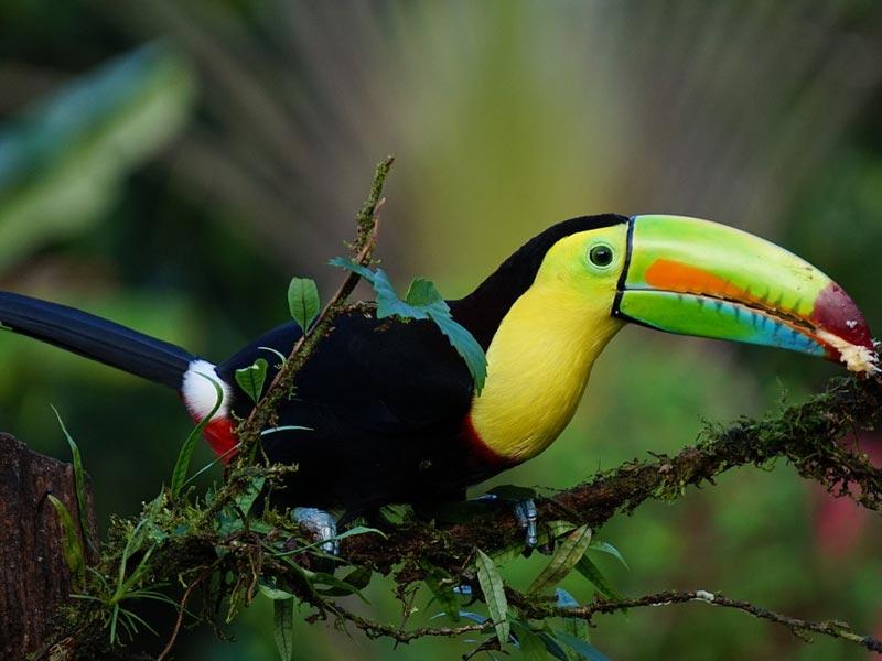weltweiser · Handbuch Fernweh · High School · Costa Rica