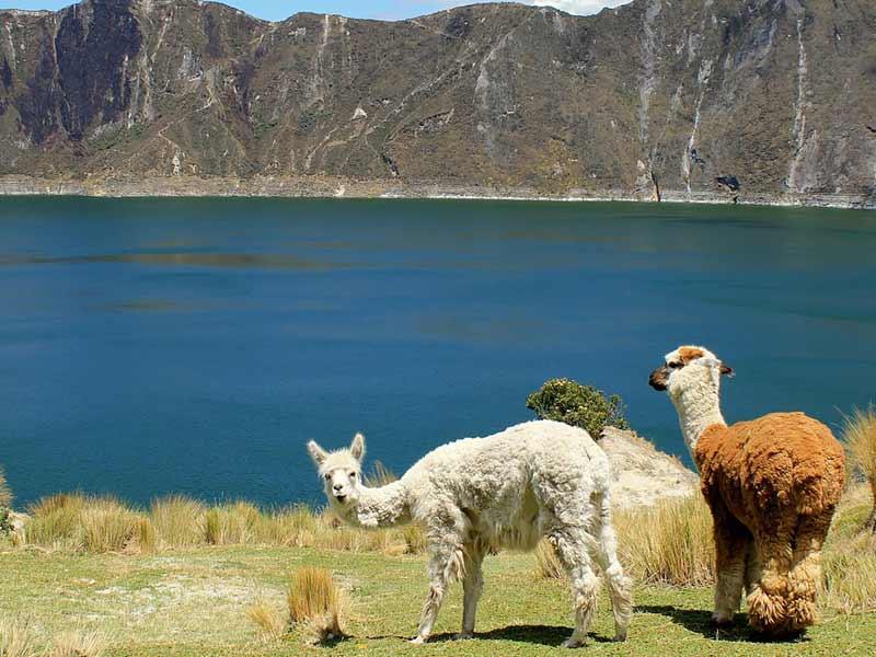 weltweiser · Handbuch Fernweh · Auslandsjahr · Ecuador